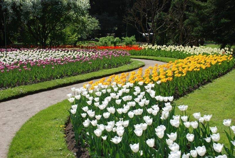 Festa dei Tulipani a Villa Taranto: una visita da non perdere