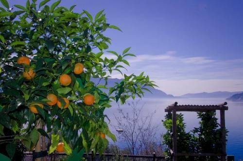 Gli agrumi e il Lago Maggiore: un amore lungo 5 secoli