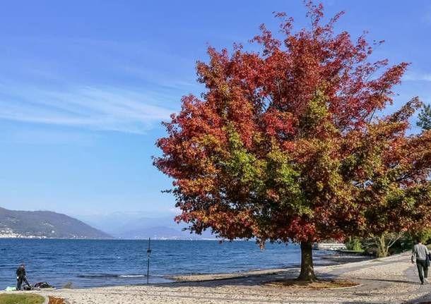 Autunno sul Lago Maggiore: è tempo di castagne