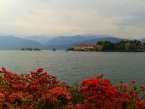 lake maggiore flower