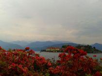 fleures lac majeur