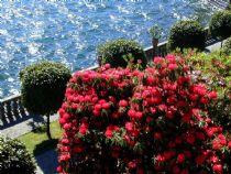 garten auf dem lago maggiore