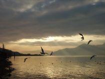 Lakefront Luino