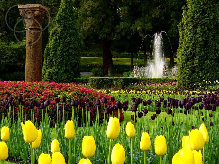 Itinerario tra i giardini botanici del Lago Maggiore